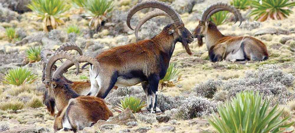 wildlife-murder.jpg