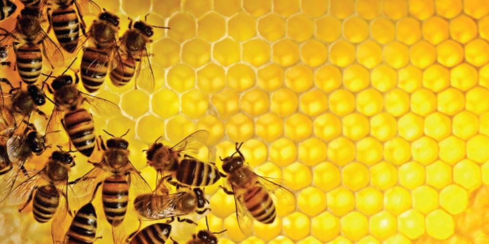 Converting-Honey.jpg
